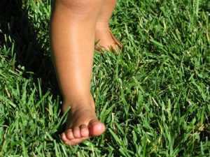 green_baby_steps