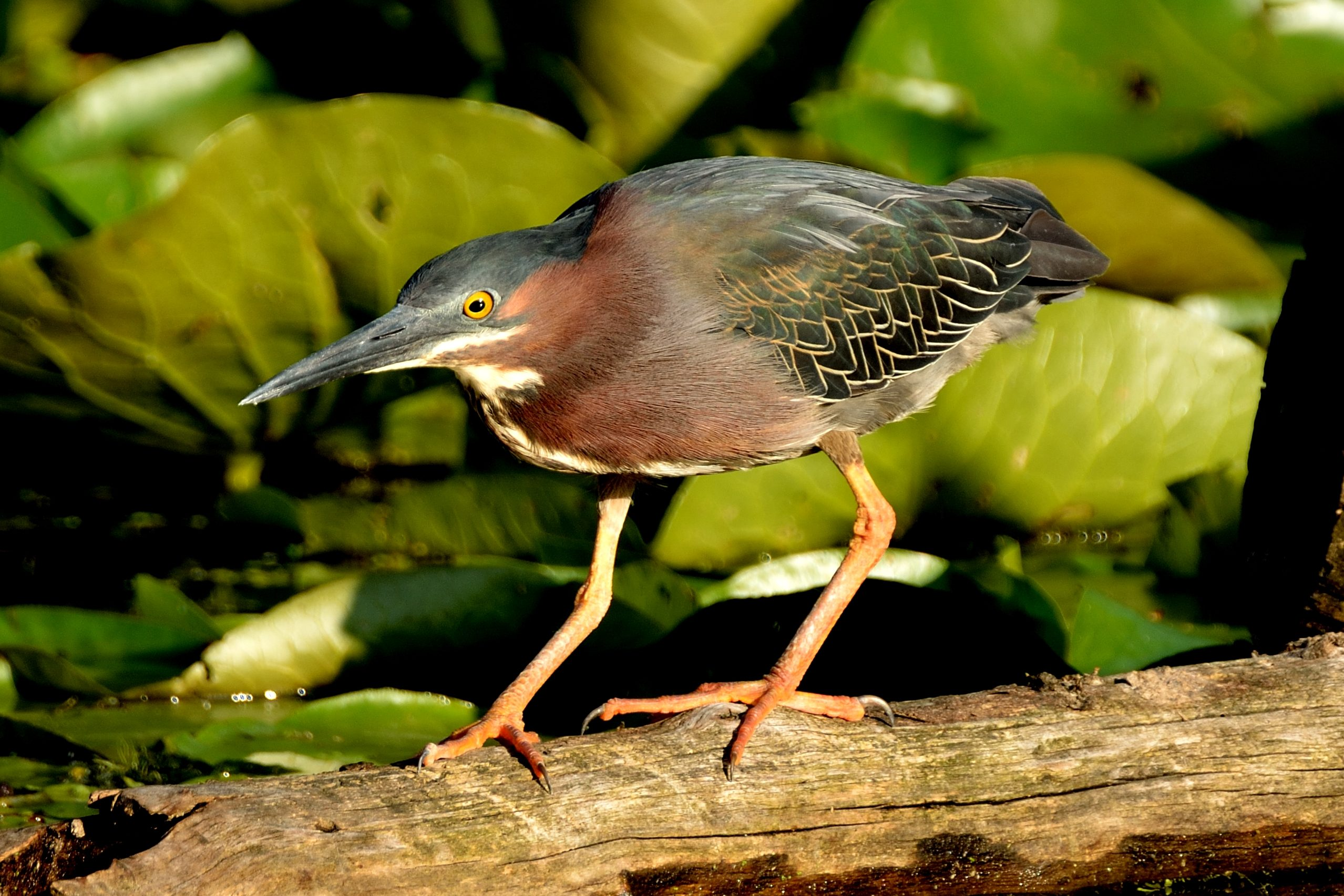 Diy Bird Feeder Stand Heron On A Log. - Birds And Blooms