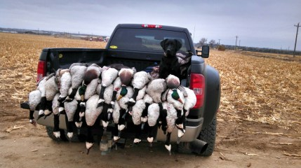 colorado goose hunting tips by Birds and Bucks outdoors