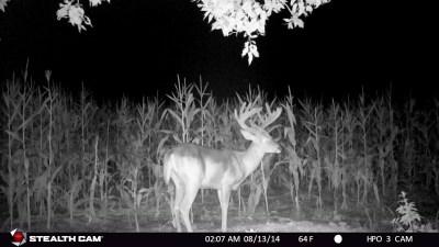 Full Rut Nebraska Whitetail Deer Hunting