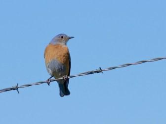 WEBL on a wire, too....