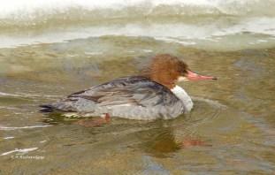 In the frigid water....