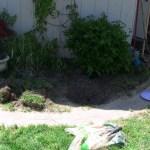 Does Your Garden Grow?
