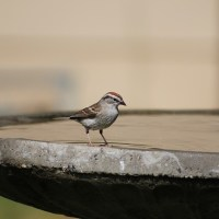 How To Use A Birdbath To Attract More Birds To Your Yard