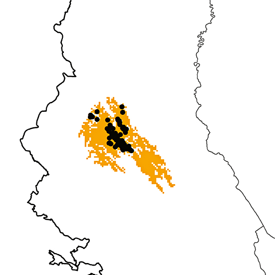 Phibalura boliviana