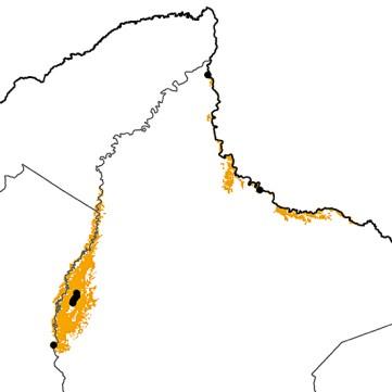 Crax globulosa