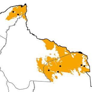 Pyrrhura amazonum