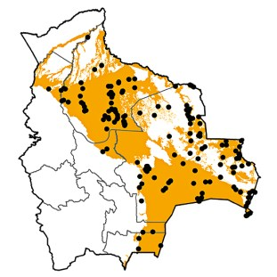 Aramus guarauna
