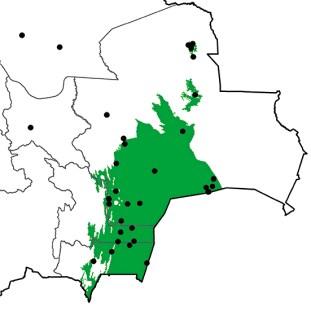 Callonetta leucophrys