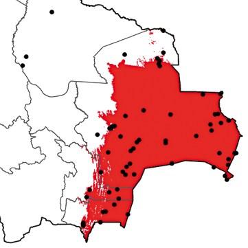 Chaetura meridionalis