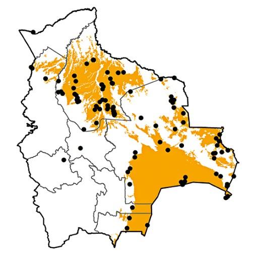 Ciconia maguari