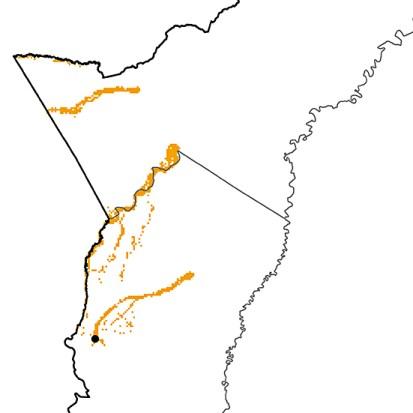 Eubucco tucinkae