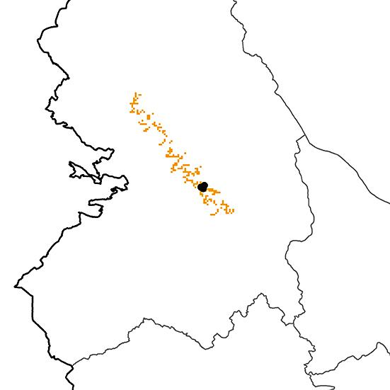 Grallaricula ferrugineipectus