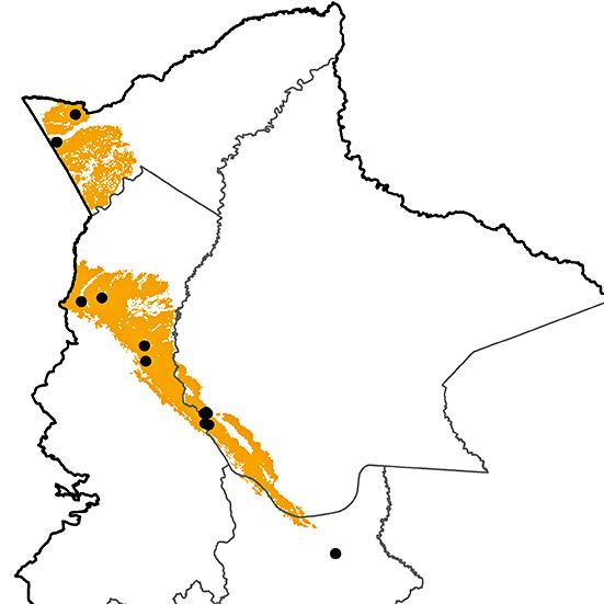 Heliodoxa aurescens