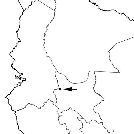 Heliodoxa rubinoides