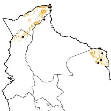 Heterocercus linteatus