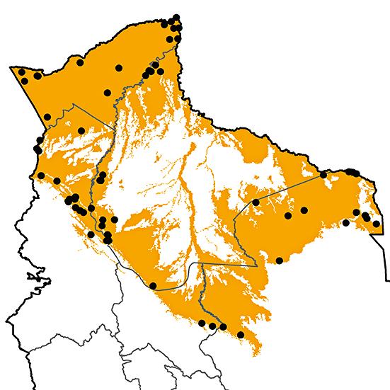 Lophostrix cristata