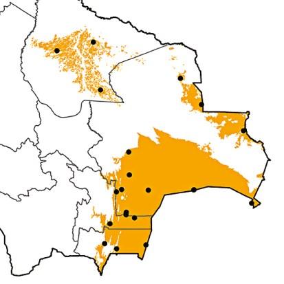 Molothrus rufoaxillaris