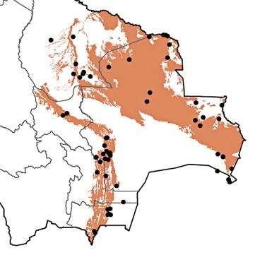 Pachyramphus viridis