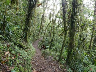 Forest trail at Las Tangaras