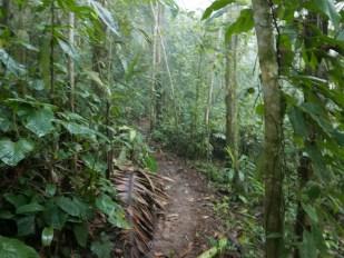 The forest at Mashpi Chocolate Farm