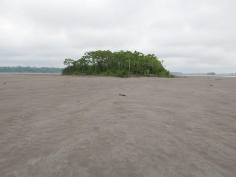 River island along the Napo River
