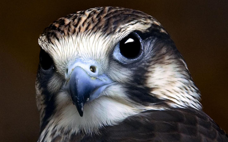 Bird Portrait Wallpaper Photo And Wallpaper All Bird