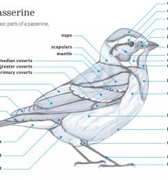 birding bird watcher s diary bird body parts label bird body diagram [ 1280 x 853 Pixel ]