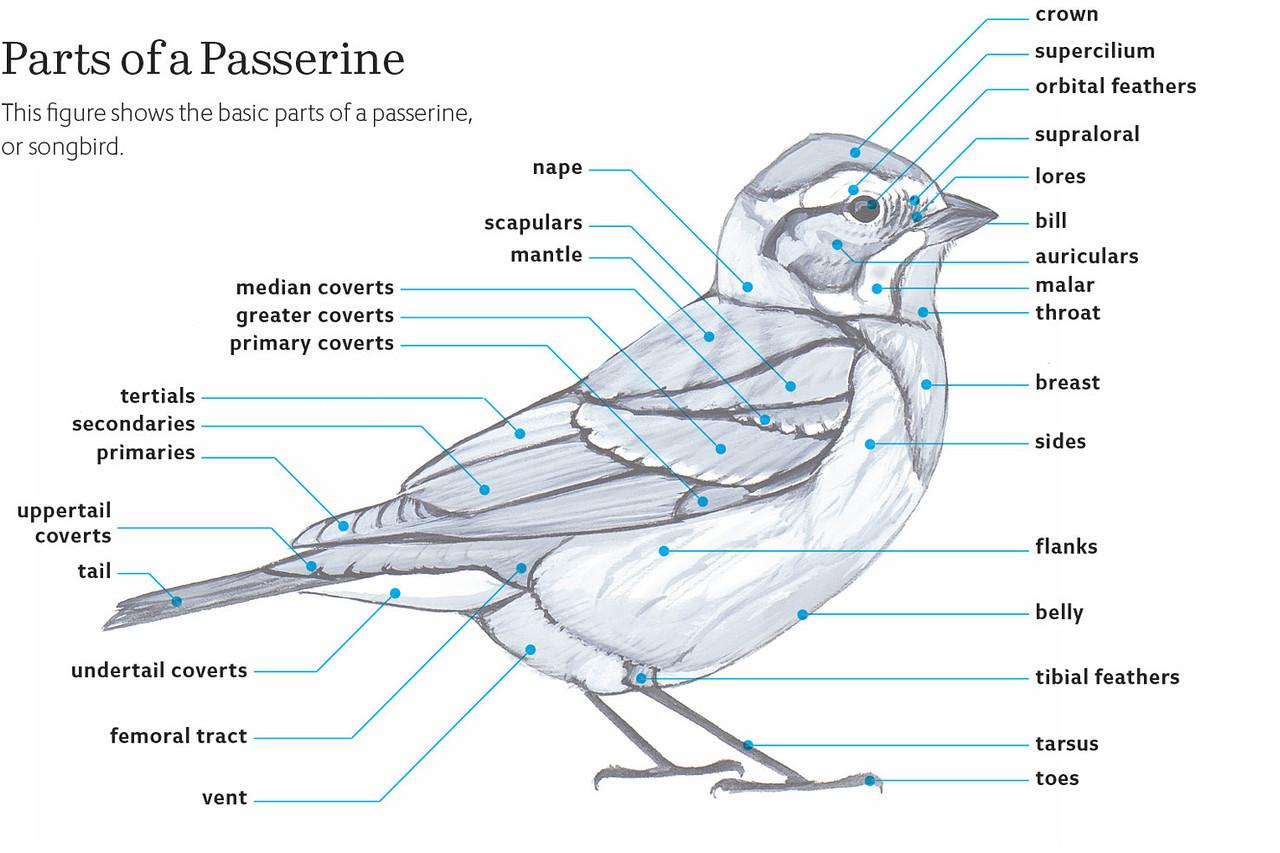 hight resolution of birding bird watcher s diary bird body parts label bird body diagram