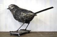 sparrow side