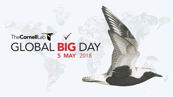 Global Big Day 2018