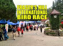 Fraser's Hill International Bird Race