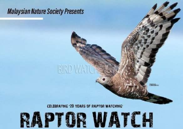 Raptor Watch Malaysia