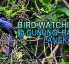 Langkawi Bird Watching