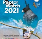 Virtual Raptor Watch 2021