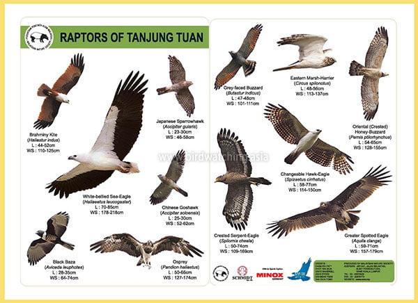 Tanjung Tuan Raptors