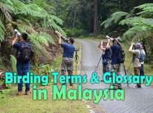 Malaysia Bird Watching Terms Glossary