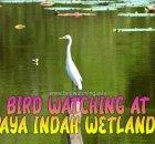 Paya Indah Wetlands Bird Watching