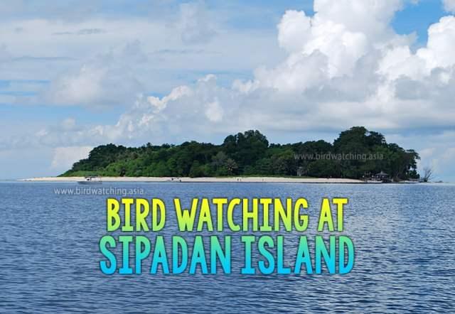 Sipadan Island Bird Watching