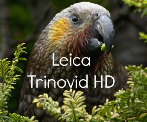 Leica Trinovid HD Review: A Premium Binocular at Half the Cost!