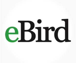 eBird: The Birding App I Use The Most