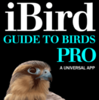 iBird Pro Review: My FAVORITE Birding App and Field Guide