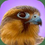 Best Bird Watching App