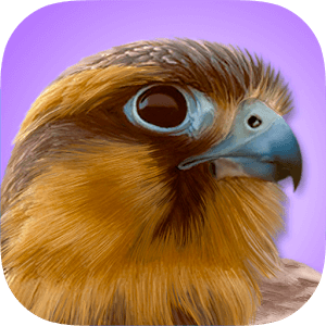 Best Bird Watching App - iBird Pro Review