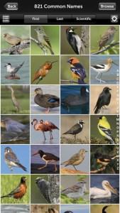 Audubon Birding Identification App