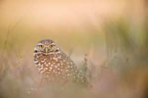 Bird Watching Ethics