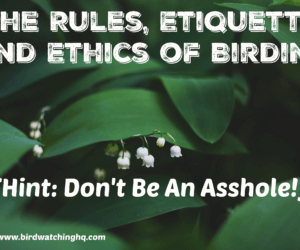The Rules, Etiquette, and Ethics of Birding (Hint: Don't Be A Jerk!)