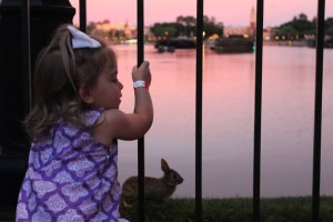 Birding and Birdwatching at Epcot