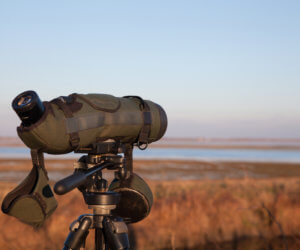 The 11 Best Spotting Scopes for Bird Watching (2021)