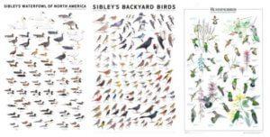 Unique Bird Watching Gifts